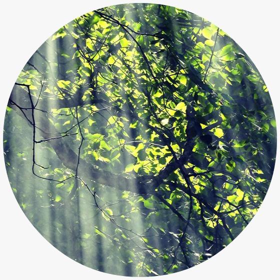 Yeşil Alev Sertifikası Nedir?